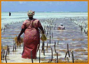 rsz_tanzania-familie-safari-zanzibar-vrouwen-in-zee